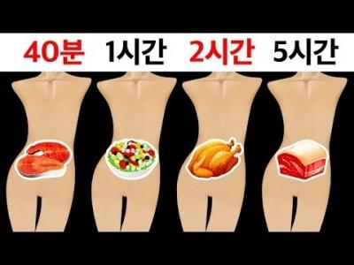 [소화과정과 혈당] 음식은 얼마나 오랫동안 위에 머물까요?